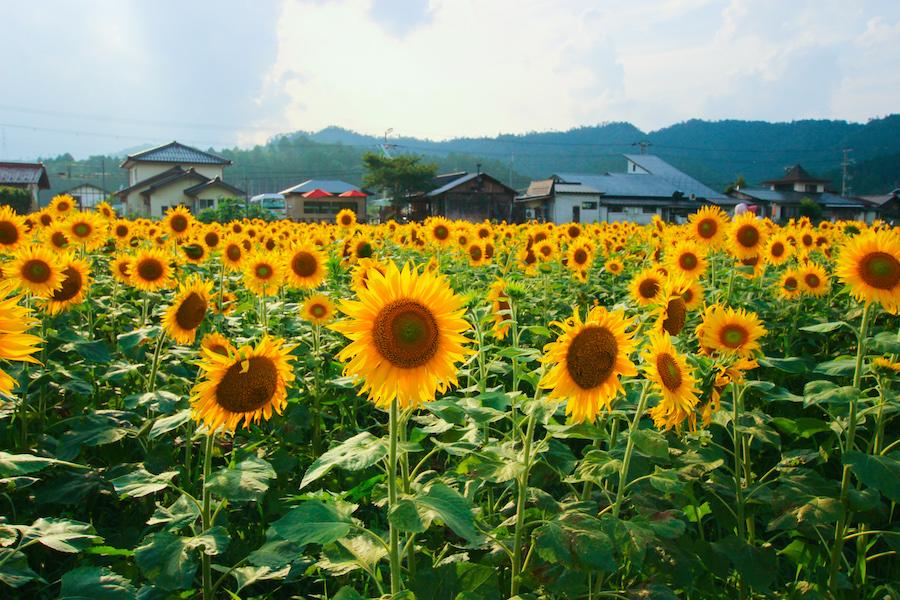 京蕪庵-風景03